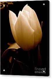 Tulips In Study 1 Acrylic Print