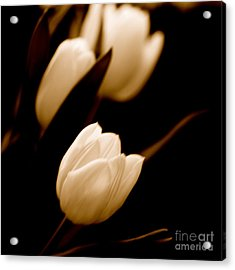 Acrylic Print featuring the photograph Tulips In Study 2 by Cathy Dee Janes