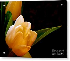 Tulips In Study 3 Acrylic Print by Cathy Dee Janes