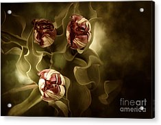 Tulips In The Mist II Acrylic Print
