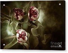 Tulips In The Mist  Acrylic Print