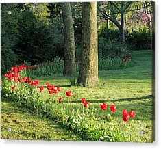 Acrylic Print featuring the photograph Tulips In The Park by Jose Oquendo