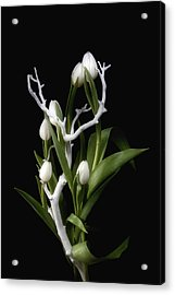Tulips In Tree Branch Still Life Acrylic Print by Tom Mc Nemar