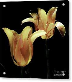 Tulips In Vaerebro Acrylic Print