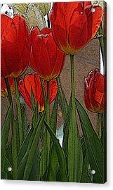 Tulips Acrylic Print by John Freidenberg