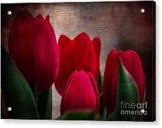 Tulips Acrylic Print by Judy Wolinsky