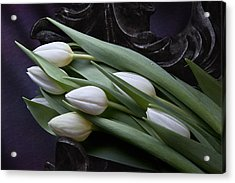 Tulips Laying In Wait Acrylic Print