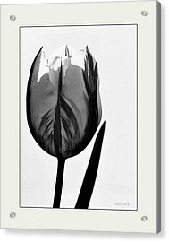 Acrylic Print featuring the photograph The Light Within by Marija Djedovic