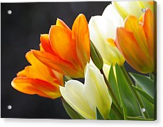 Acrylic Print featuring the photograph Tulips by Marilyn Wilson