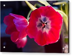 Acrylic Print featuring the photograph Tulips Mixed Light by Paul Indigo