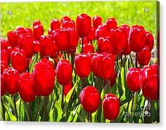 Tulips Acrylic Print by Nur Roy