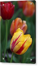 Tulips On Fire II Acrylic Print by Suzanne Gaff
