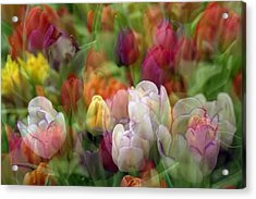 Acrylic Print featuring the photograph Tulips by Penny Lisowski