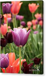Tulips Welcome Spring Acrylic Print by Eva Kaufman