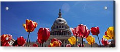 Tulips With A Government Building Acrylic Print by Panoramic Images