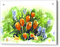 Tulips With Blue Grape Hyacinths Explosion Acrylic Print by Kip DeVore