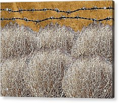 Tumbleweed And Barbed Wire Acrylic Print by Suzanne Powers