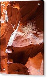 Tumbleweed In Antelope Canyon Acrylic Print by Susan Schmitz
