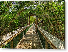 Tunnel Of Mangrove Green Acrylic Print