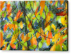 Tupelo Tapestry - Glowing Leaves Acrylic Print by Saxon Holt