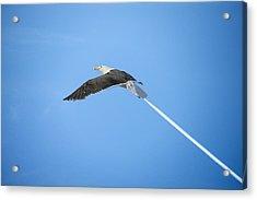 Turbo Seagull Acrylic Print by Michael Mogensen