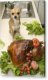 Turkey And Dog Acrylic Print