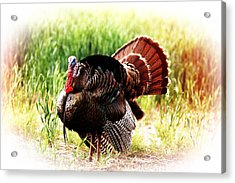 Acrylic Print featuring the photograph Turkey At Sunrise by Shirley Heier