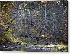 Turkey Crossing At Big Hollow Acrylic Print