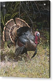 Turkey In The Weeds Acrylic Print