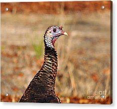Turkey Profile Acrylic Print by Al Powell Photography USA