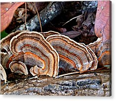Turkey Tail Fungi In Autumn Acrylic Print