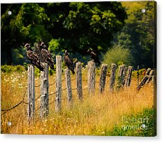 Turkey Vultures Waiting For Dinner Acrylic Print by Todd Bielby