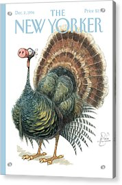 Turkey Wearing A False Pig Nose Acrylic Print by Peter de Seve