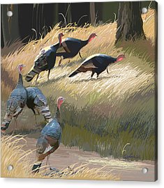 Turkeys In The Fall Sun Acrylic Print