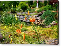 Acrylic Print featuring the photograph Turk's Cap Lily by Kathryn Meyer