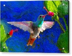 Da052 Turkscap Hummingbird  Acrylic Print