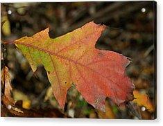Turn A Leaf Acrylic Print by JAMART Photography
