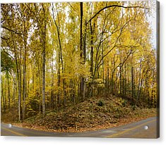 Turned The Brights On Acrylic Print by Heather Applegate