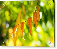Turning Autumn Acrylic Print by Aaron Aldrich