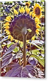 Turning Back Acrylic Print by Jan Amiss Photography