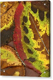 Turning Leaves 3 Acrylic Print by Stephen Anderson