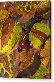 Turning Leaves 4 Acrylic Print by Stephen Anderson