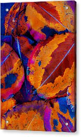 Turning Leaves 5 Acrylic Print by Stephen Anderson