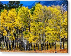 Turning Of The Aspens Acrylic Print