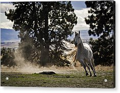 Turning On A Dime Acrylic Print by Wes and Dotty Weber