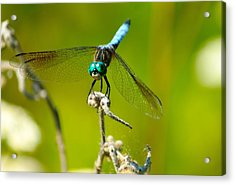 Turquoise Dragonfly Acrylic Print by Lorri Crossno