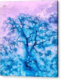 Turquoise Oak Tree Acrylic Print