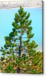 Turquoise Tree Acrylic Print