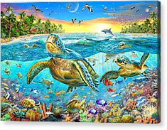 Turtle Cove Acrylic Print by Adrian Chesterman