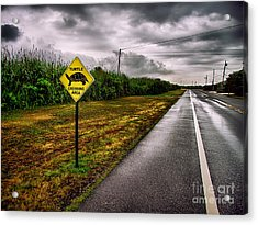 Turtle Crossing Area Acrylic Print by Mark Miller
